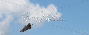 Birds of Prey - GJK Photography